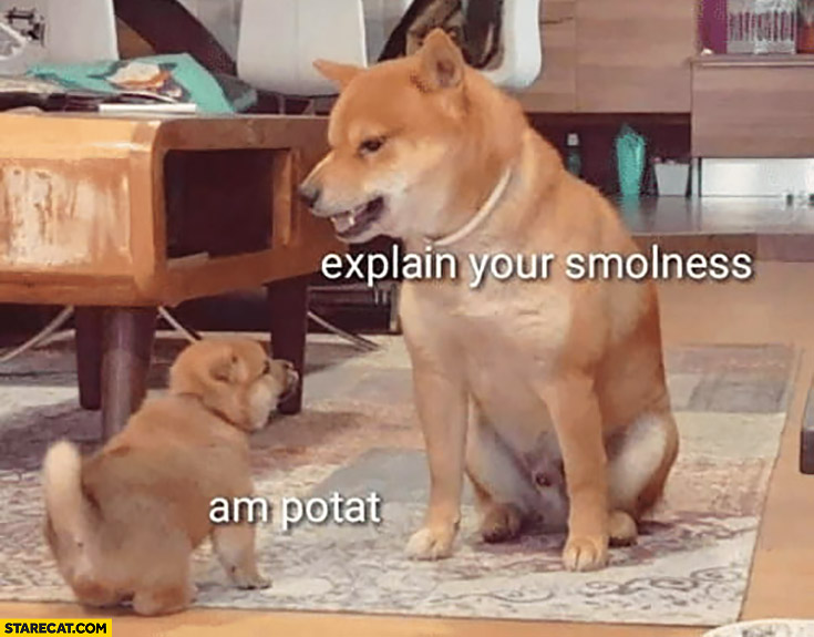 Dog: explain your smolness, am potat I am potato