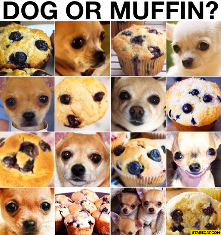 Dog face or a muffin? guess