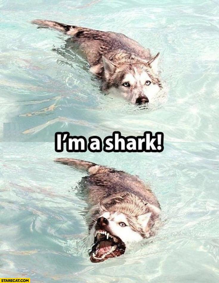 Dog I'm a shark