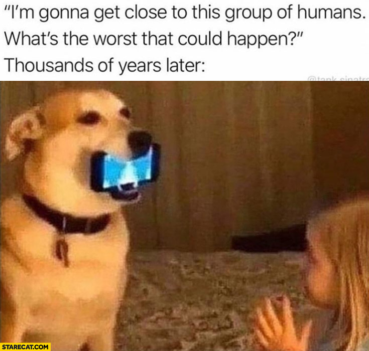 Dog: I'm gonna get close to humans, what's the worst that could happen? Holding smartphone for a girl