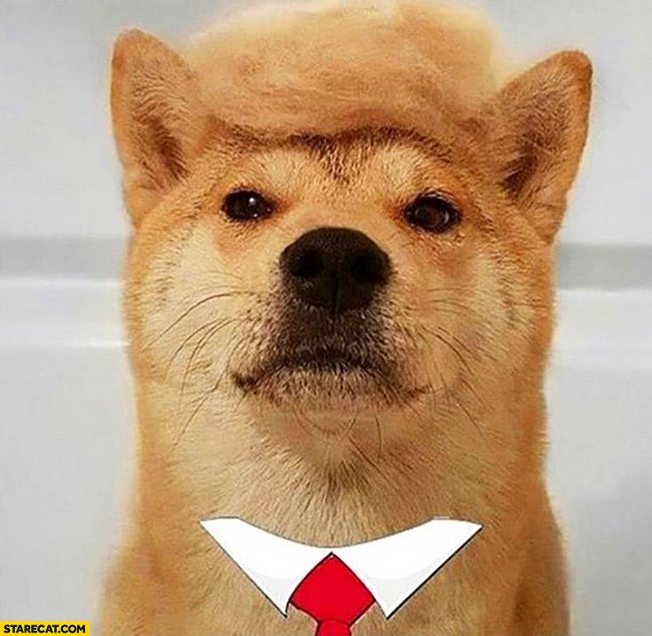 Dog looking like Donald Trump