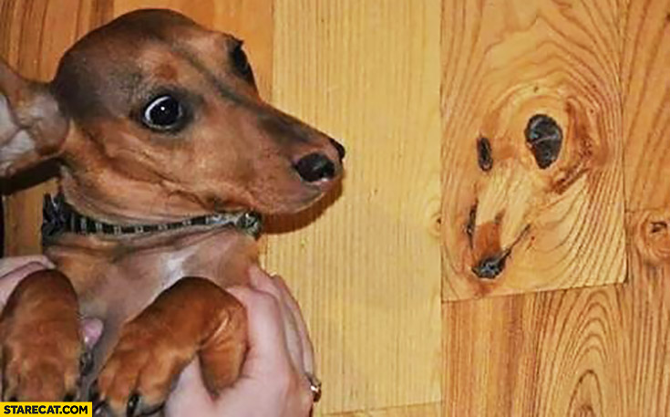 Dog looking like wood silly picture