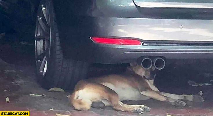 Dog looking through car exaust pipes funny picture