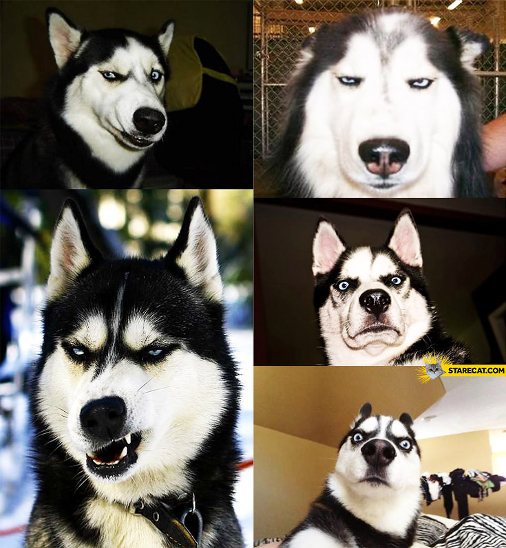 Dog making silly faces