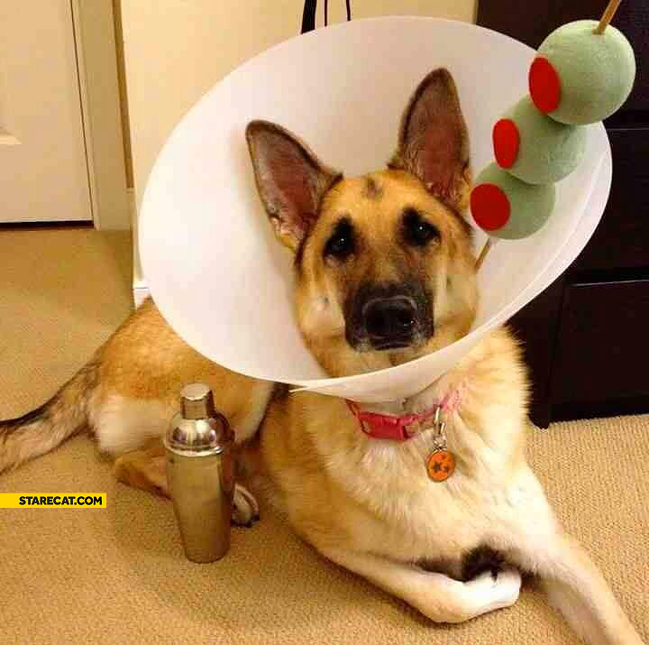 Dog Martini costume