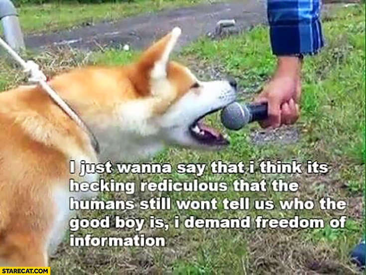 Dog microphone: I just wanna say that I think it's hecking rediculous that the humans still won't tell us who the good boy is, I demand freedom of information