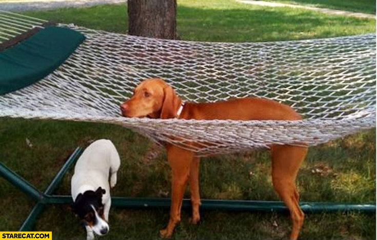 Dog on a hammock fail