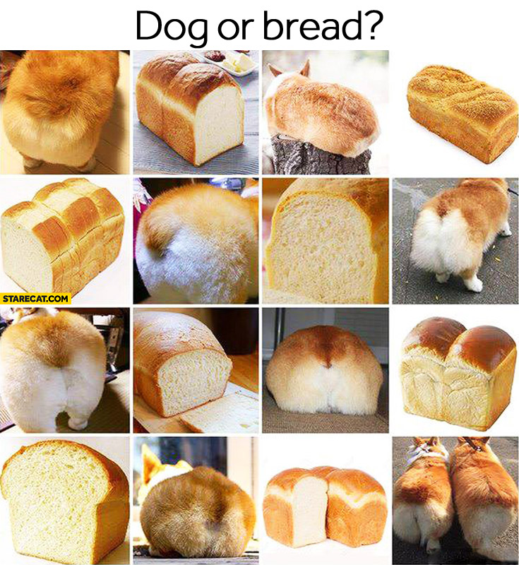 Dog or bread? guess