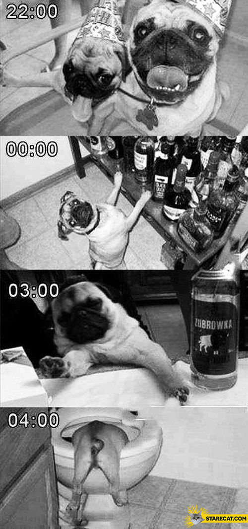 Dog pug party