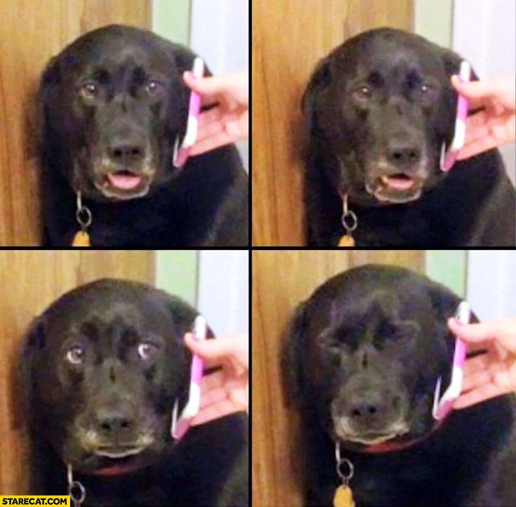 Dog receives bad news over phone gets sad