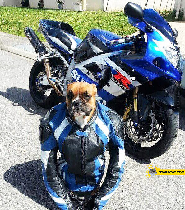Dog riding motorbike motocyclist