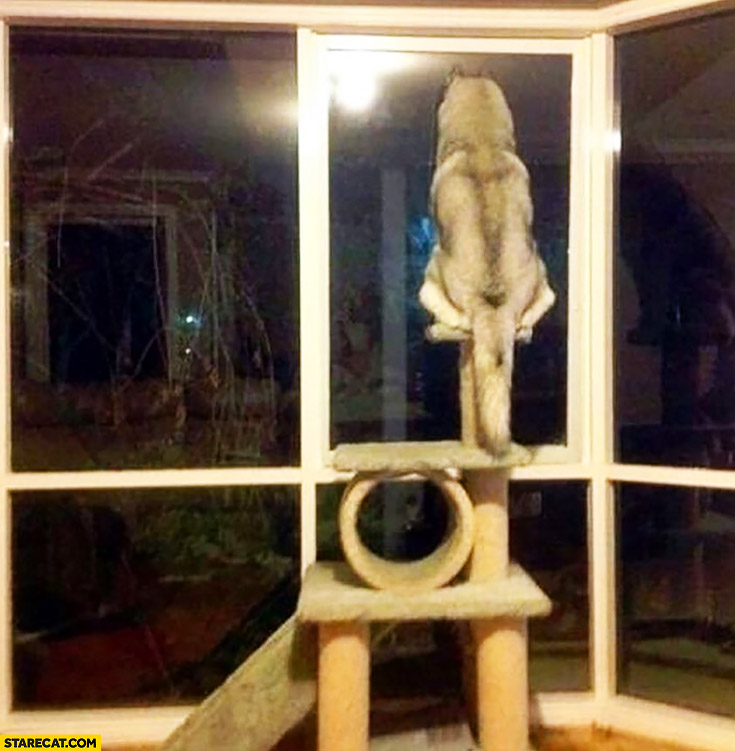 Dog sitting on top of a cat playground toy