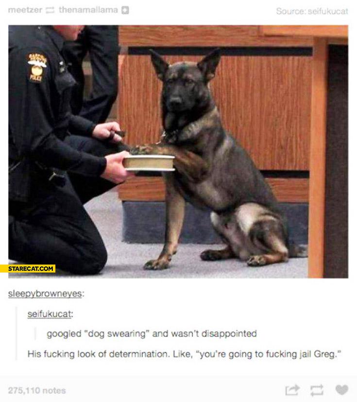 Dog swearing you're going to fucking jail Greg