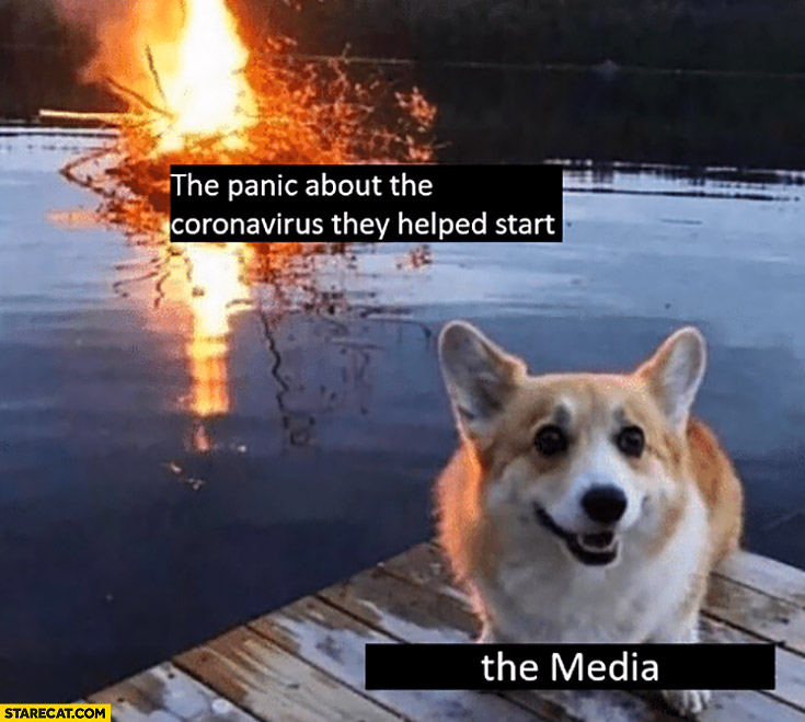 Dog the media the panic about the coronavirus they helped start bushes on fire in water