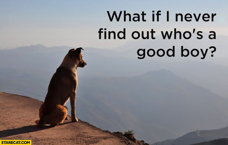 Dog thinking: what if I never find out who's a good boy?