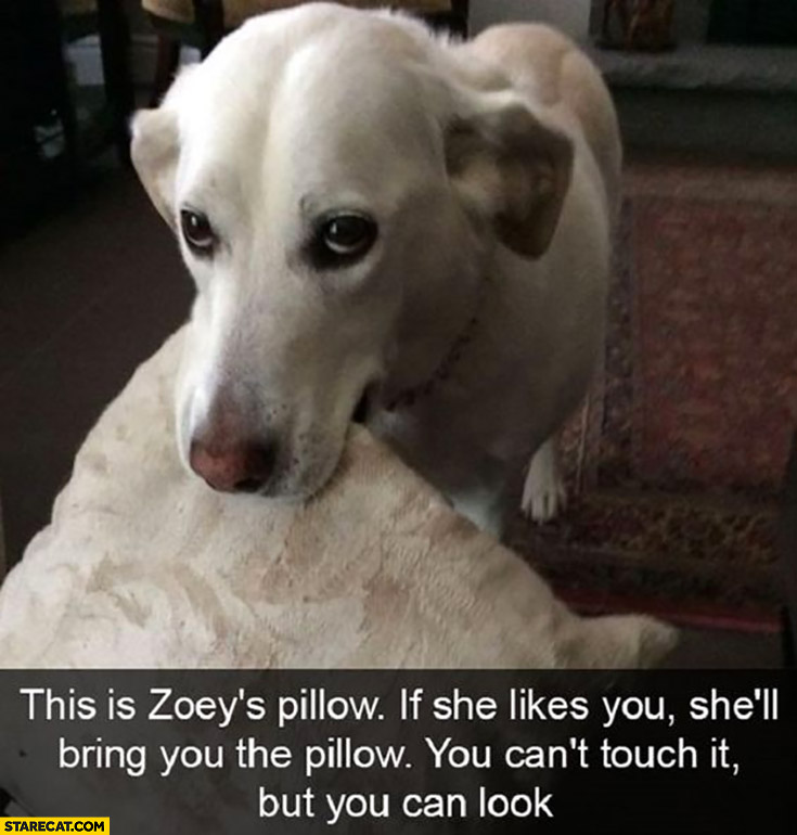 Dog this is dogs pillow, if she likes you she'll bring you the pillow you can't touch it but you can look