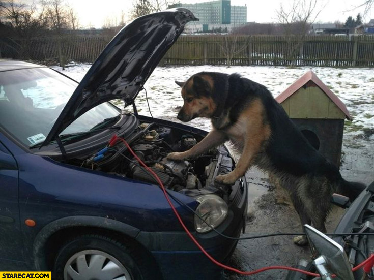 Dog trying to fix his car photo picture