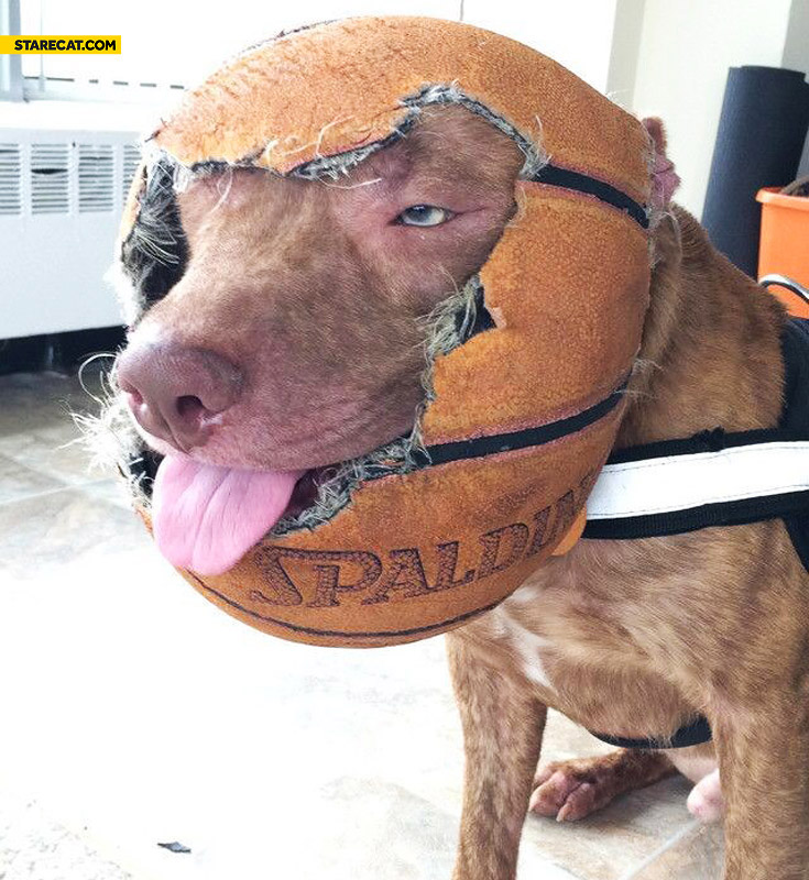 Dog with a ball on his head