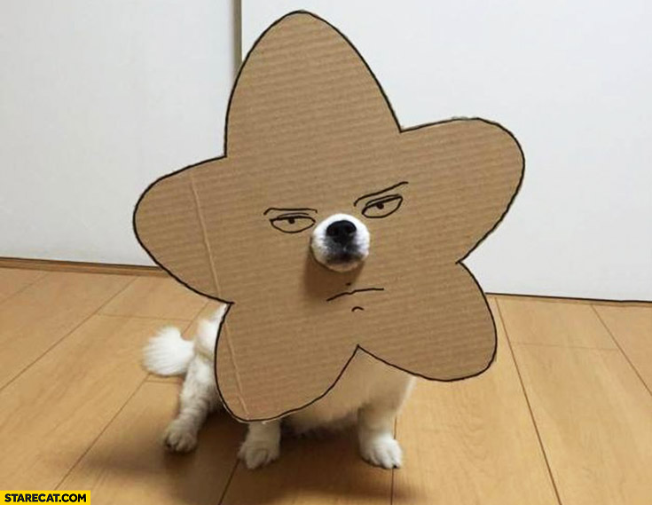 Dog with cardboard star cute cosplay