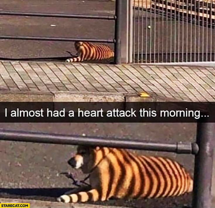 Dog with shadow tiger stripes I almost had a heart attack this morning