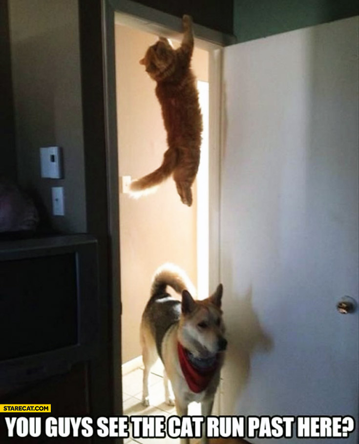 Dog you guys see the cat run past here hanging cat