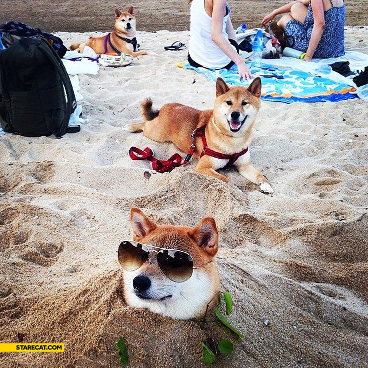 Doge at the beach