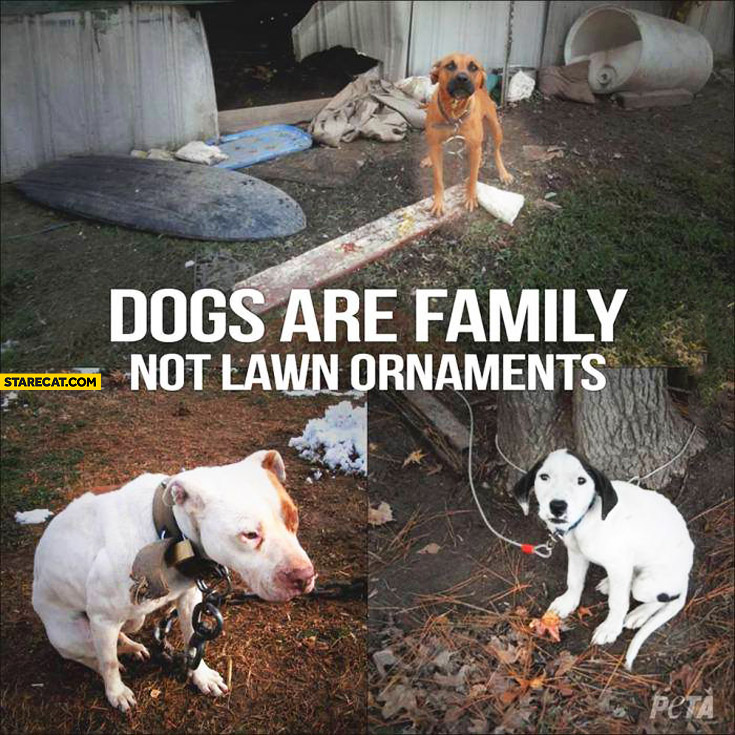 Dogs are family not lawn ornaments