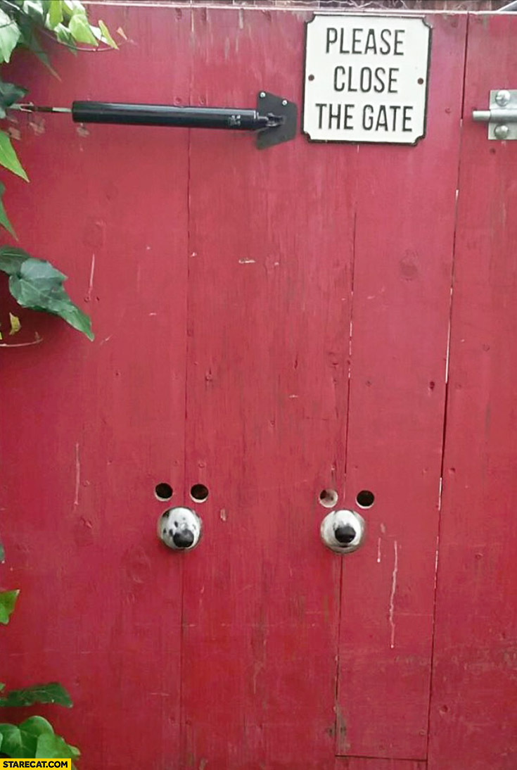 Dogs looking through gate holes. Please close the gate