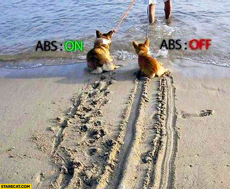 Dogs pulled into water ABS on off comparison anti-lock braking system