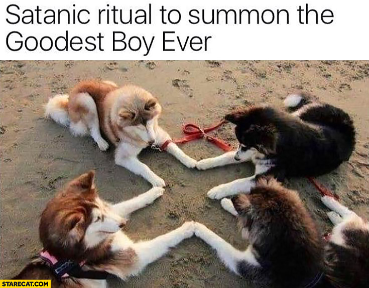 Dogs satanic ritual to summon the goodest boy ever