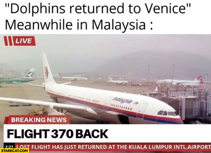 Dolphins returned to Venice, meanwhile in Malaysia flight 370 is back
