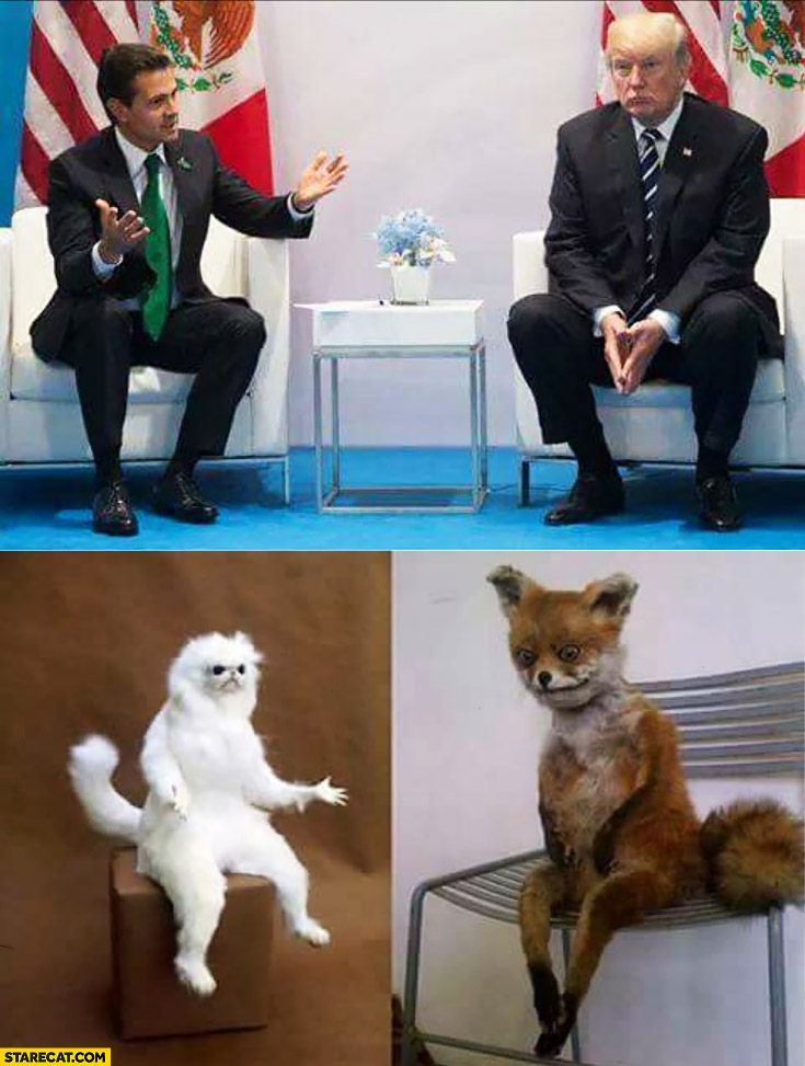 Donald Trump sitting like a sad fox