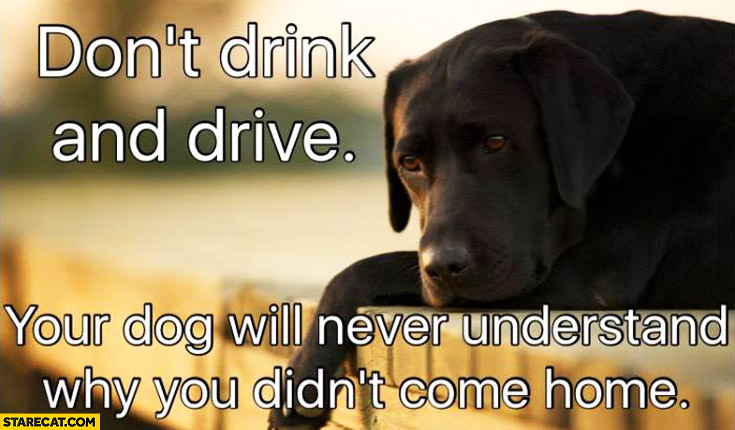 Don't drink and drive your dog will never understand why you didn't come home