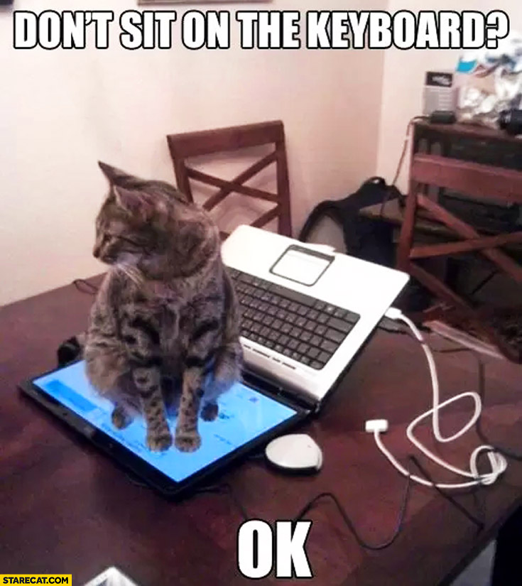 Don't sit on the keyboard OK cat sitting on a laptop screen