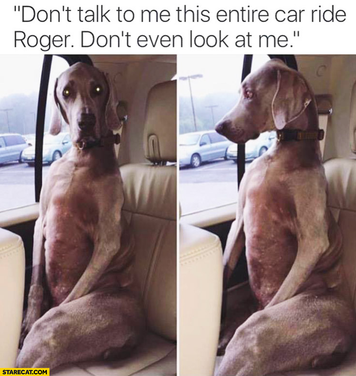 Don't talk to me this entire car ride Roger. Don't even look at me. Dog sitting in a car