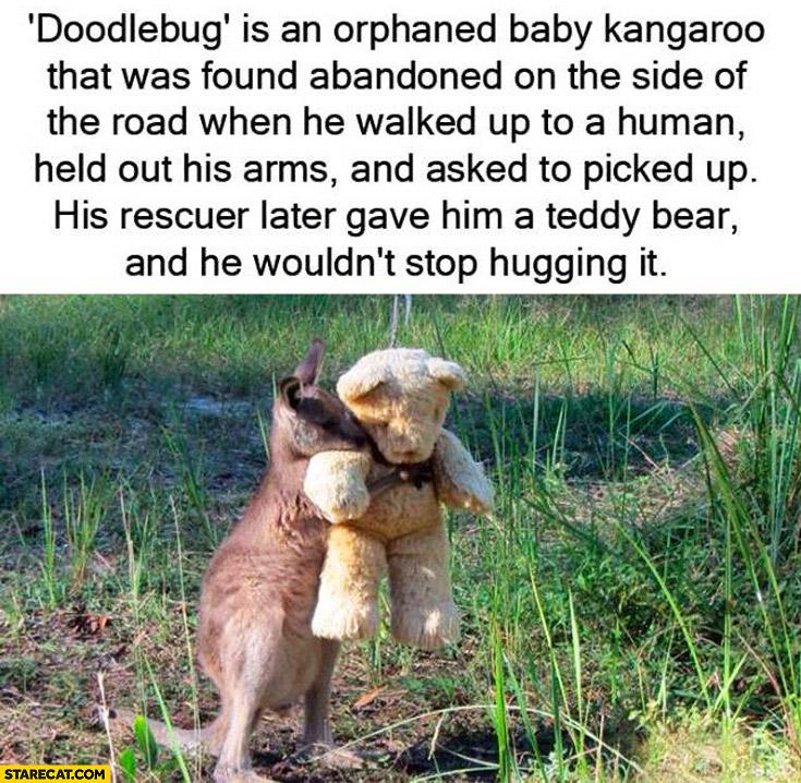 Doodlebug orphaned kangaroo hugging a teddy bear