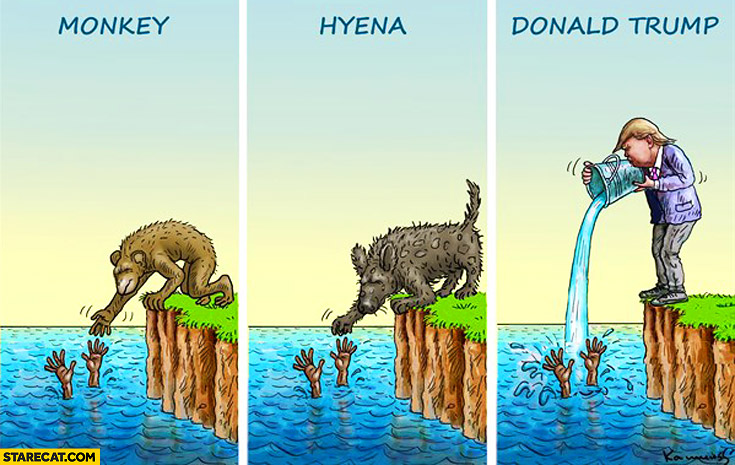 Drowning survivor monkey, hiena, Donald Trump comparison