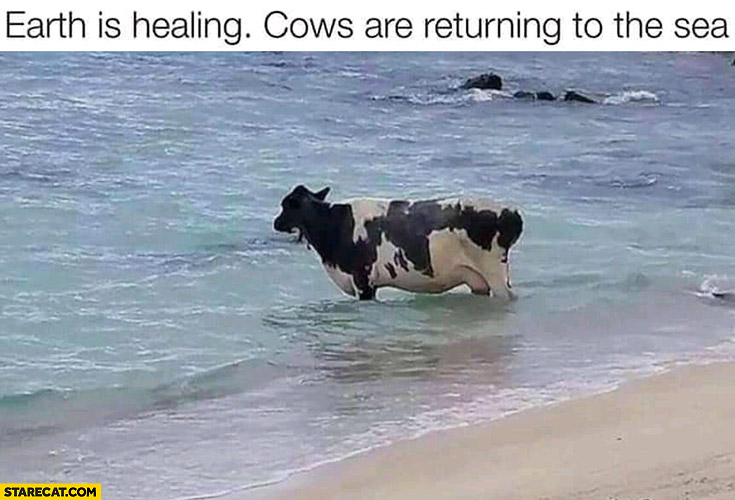 Earth is healing, cows are returning to the sea