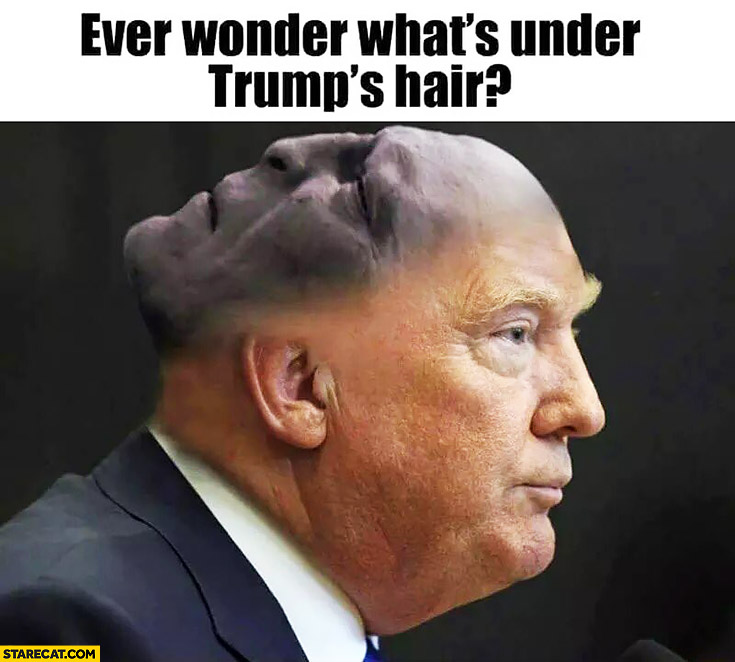 Ever wonder what's under Donald Trump's hair? Voldemort face