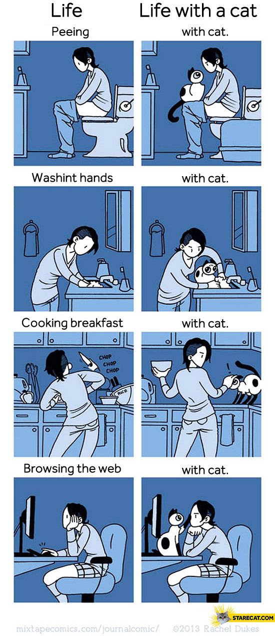 Everyday life with and without cat