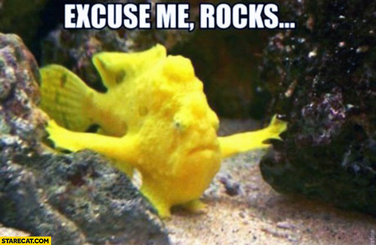 Excuse me rocks gold fish
