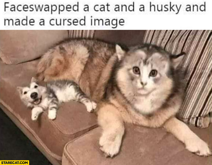 Faceswapped a cat and a husky and made a cursed image