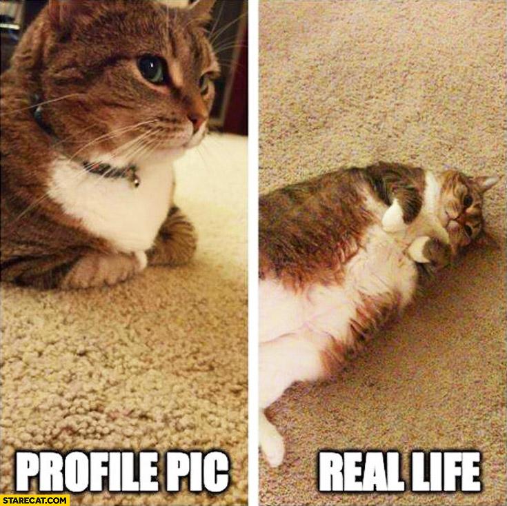 Fat cat profile pic, real life comparison