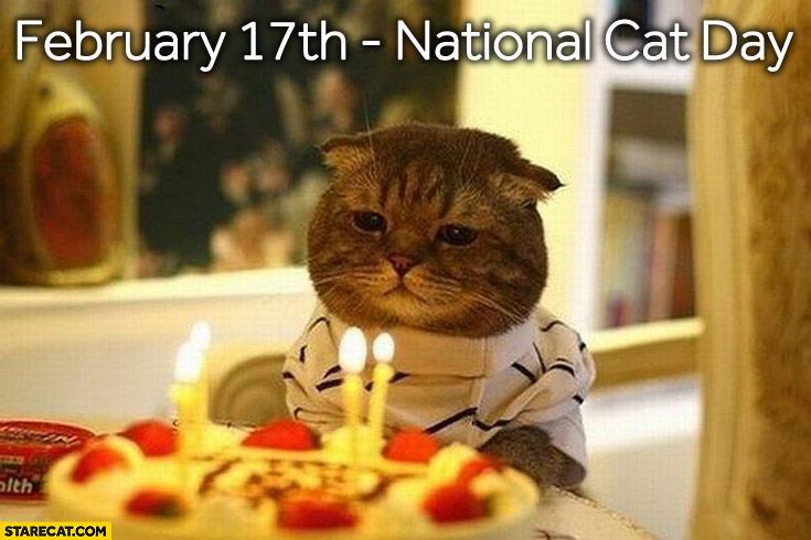 February 17th National Cat Day