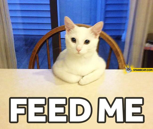 Feed me cat