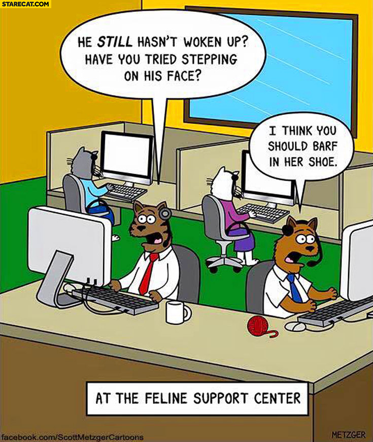 Feline support center he still hasn't woken up have you tried stepping on his face