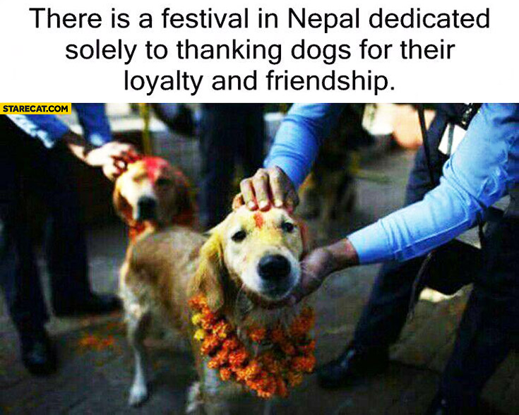 Festival in Nepal dedicated to thanking dogs for their loyalty and friendship