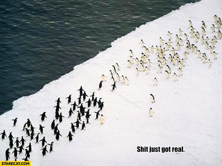 Fighting penguins antarctica