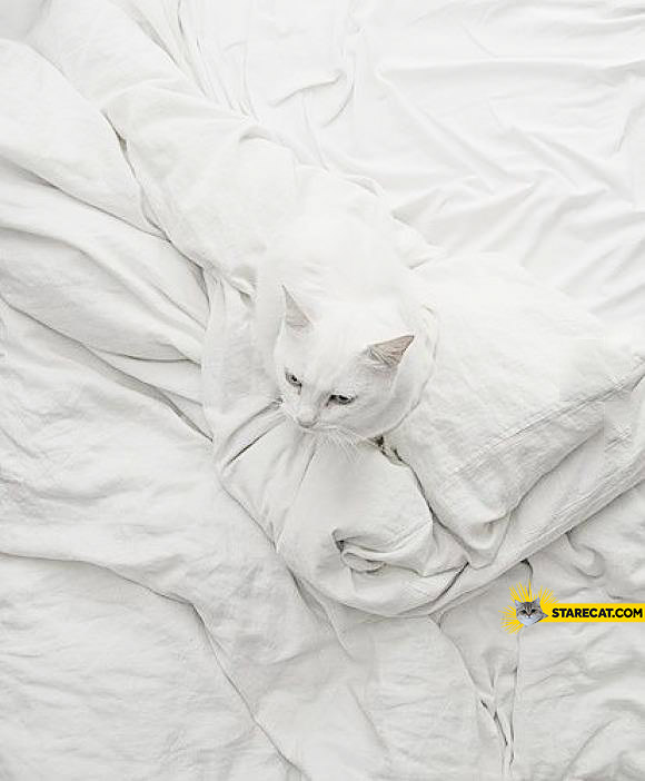 Find a cat in this picture white