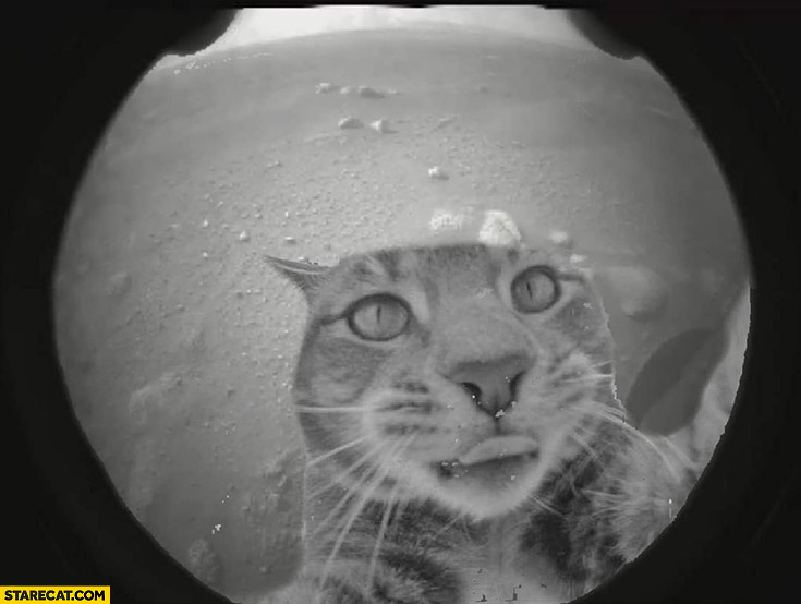 First mars perseverance picture cat selfie photoshopped